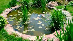 Виды декоративных болот