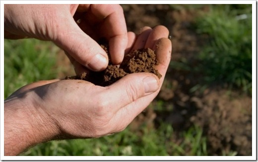 Как исследуют почву?