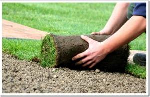 Базовые правила: высадка рулонного газона